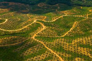 Palm oil plantation, Malaysia